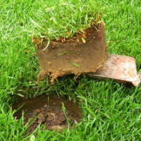 Lawn Repair Hendon