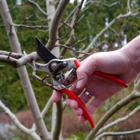 Tree Pruning Hendon