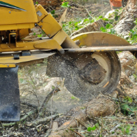 Stump Grinding Hendon