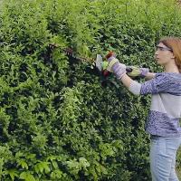 Weeding & Pruning Hendon